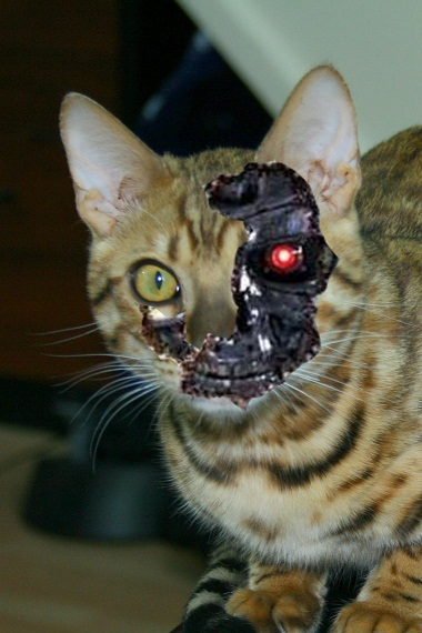 cyborg_cat