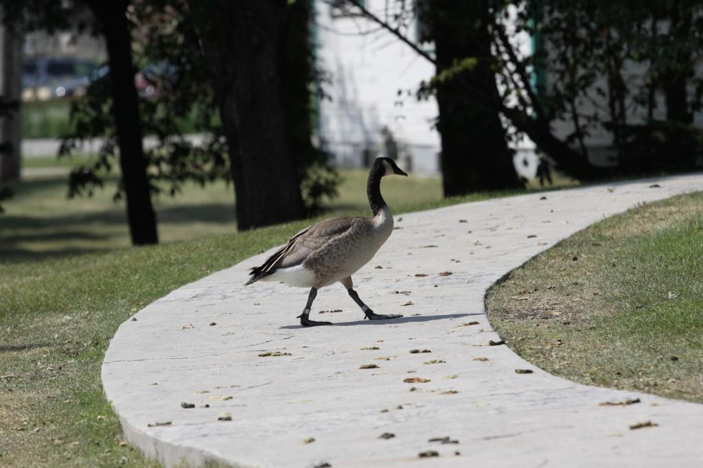 GooseWaste